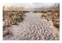 Path To The Beach Fine-Art Print