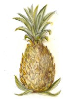 Pineapple Sketch I Fine-Art Print