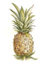 Pineapple Sketch II Fine-Art Print