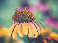 Mellow Yellows I Fine-Art Print