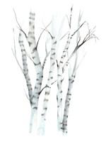 Aquarelle Birches II Fine-Art Print