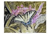 Butterfly in Nature II Fine-Art Print