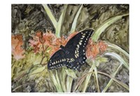 Butterfly in Nature III Fine-Art Print