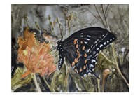 Butterfly in Nature IV Fine-Art Print