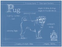Blueprint Pug Framed Print