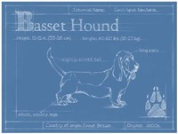 Blueprint Basset Hound Framed Print