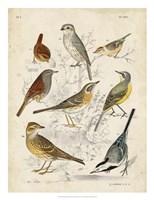 Gathering of Birds I Fine-Art Print