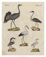 Heron Classification I Fine-Art Print