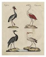 Heron Classification II Fine-Art Print