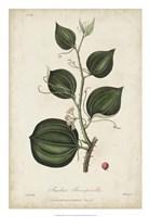 Medicinal Botany I Fine-Art Print