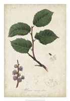Medicinal Botany III Fine-Art Print