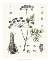 Berge Botanicals I Fine-Art Print