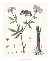 Berge Botanicals II Fine-Art Print