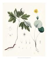 Berge Botanicals III Fine-Art Print