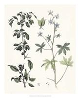 Berge Botanicals IV Fine-Art Print