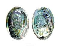 Abalone Shells I Fine-Art Print