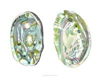 Abalone Shells II Fine-Art Print