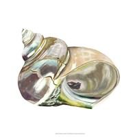 Seashore Souvenirs IV Fine-Art Print
