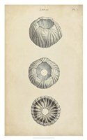 Cylindrical Shells I Fine-Art Print