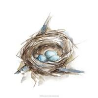 Bird Nest Study II Fine-Art Print