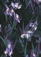 Iristif Fine-Art Print