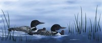 Family of Loons Fine-Art Print