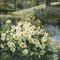 Primroses in Water Fine-Art Print
