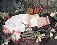 Fairy Dreams Fine-Art Print