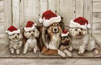 Dogs Christmas Fine-Art Print