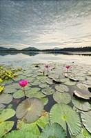 Morning Lilies Fine-Art Print
