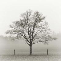 Winter Tree, Cades Cove Fine-Art Print