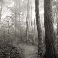 Woodland Path Fine-Art Print