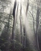 Woodland Sun Fine-Art Print