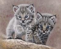 Bobcat Babies Fine-Art Print