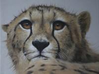 Cheetah Study Fine-Art Print