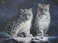 Young Snow Leopards Into the Dark Fine-Art Print