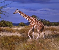 Reticulated Giraffe Fine-Art Print