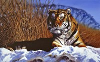 Siberian Tiger In Snow Fine-Art Print