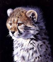 Cheetah Cub Fine-Art Print