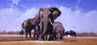 King Of Marabou Pan Fine-Art Print