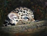 Peekaboo Amur Leopard Cub Fine-Art Print