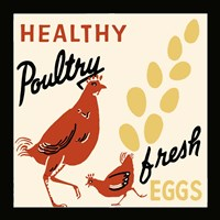 Healthy Poultry-Fresh Eggs Fine-Art Print