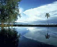 Palm Tree Alone, Big Island, Hawaii Fine-Art Print