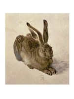 Young Hare, c.1502 Fine-Art Print