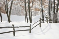 Winter Fence & Shadow, Farmington Hills, Michigan 09 Fine-Art Print