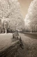 Snowy Landscape Fine-Art Print