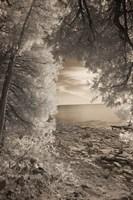 Through the Trees Fine-Art Print