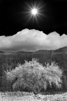 Cottonwood & Sunbeams, Canyon de Chelly, Arizona 10 Fine-Art Print