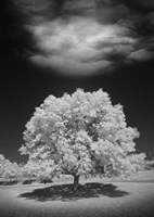 Lone Tree & Cloud, Green Bay, Wisconsin 12 Fine-Art Print
