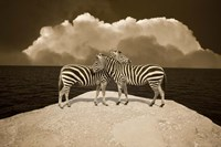 Two Zebras, Port Austin, MI 11 Fine-Art Print